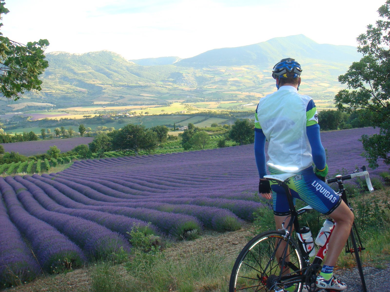 Cyclomundo rider looking upon the Lavender fields