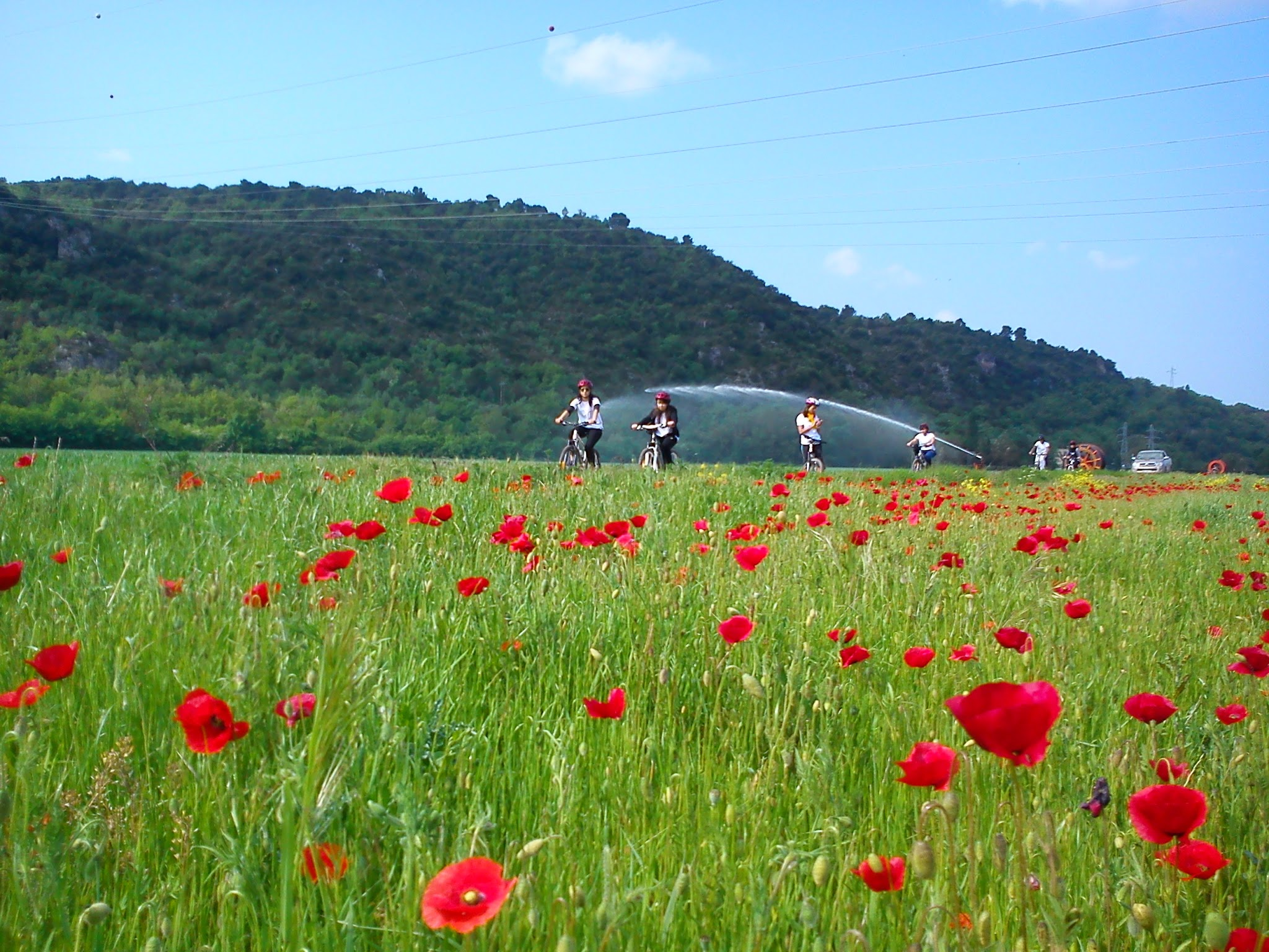 Cyclomundo riders in red poppy field