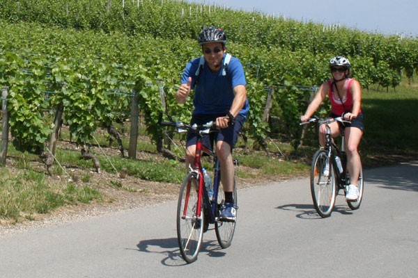 Cyclomundo riders biking passed a vineyard in Provence