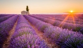 Cycling trips through lavender fields in Provence: Alpilles, Luberon, Verdon