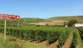 Cycling trips through vineyards of Alsace