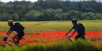 Poppies will make your bike ride colorful during the blooming season