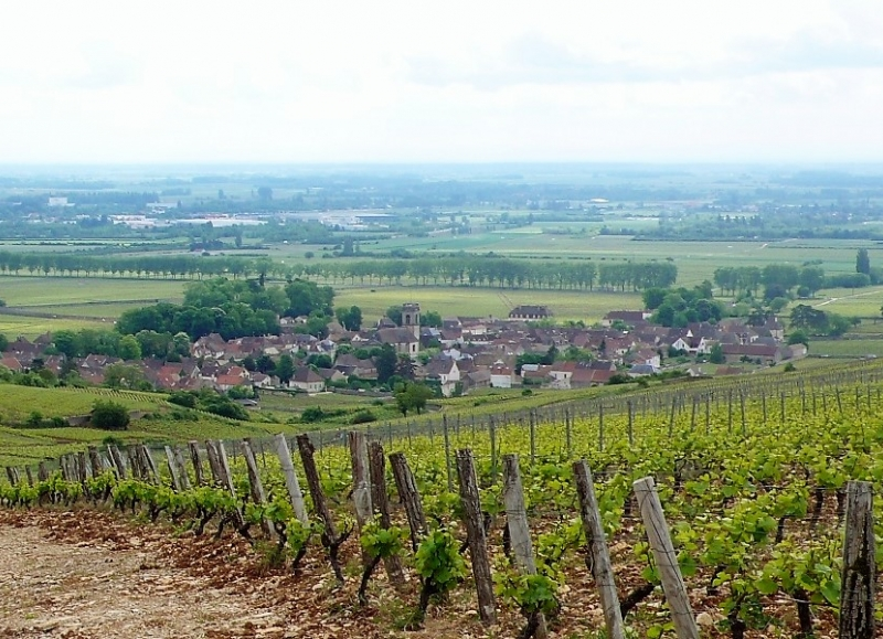 This cycling tour takes you through vineyards and countryside