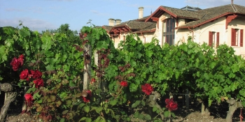 During the bike ride, discover the charm of some old houses hidden in the vineyards
