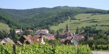 Cycling through typical villages and vineyards in Alsace