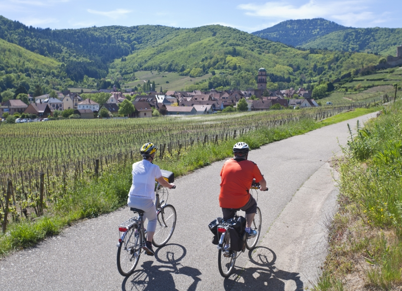 On our Alsace cycling trips, most of the riding is done through vineyards or farmlands