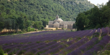 Senanque Abbey in Gordes, surrounded by lavender
