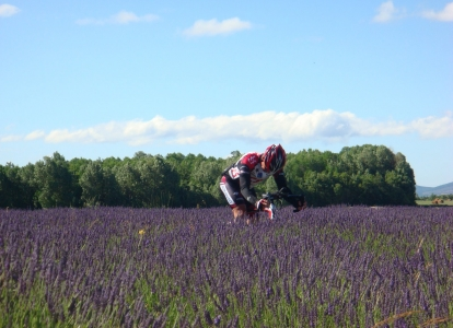 At times, it feels like you are riding through lavender
