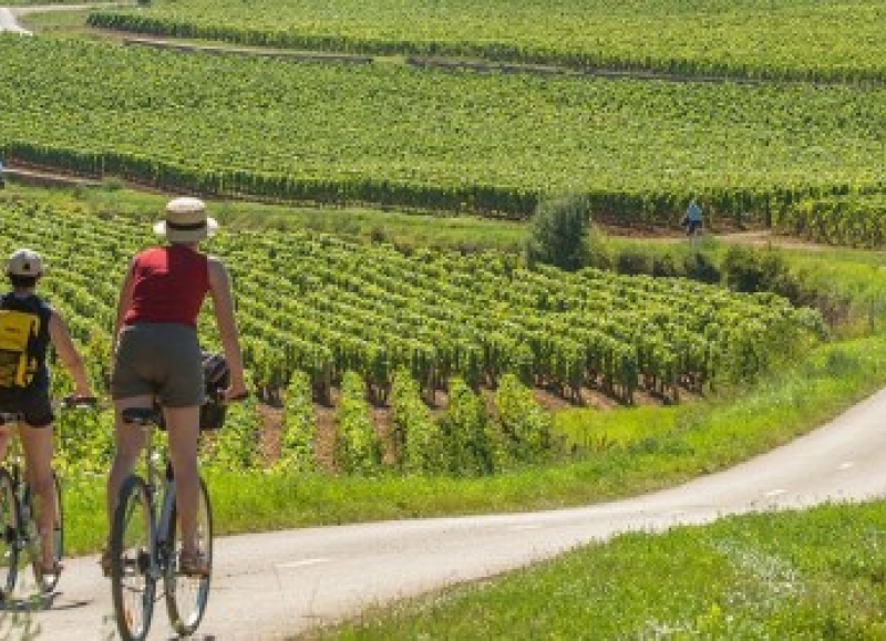 Biking in the vineyards of Burgundy between Beaune and Dijon