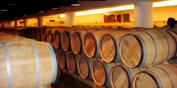 Discover wine cellar and wine tasting in Bordeaux wine producing area