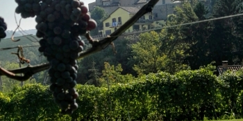 Cycle through the renowned Piedmontese wine country