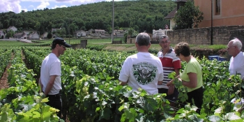 Biking tours in Burgundy will take you through some of the world's most famous vineyards