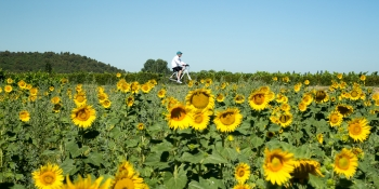 Luberon, Alpilles, and Côtes du Rhône, our most comprehensive self-guided bike tour of Provence