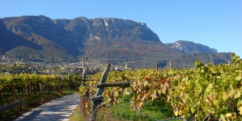 The itinerary will take you through quiet roads through vineyards