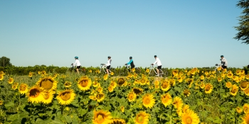 Cycling through sun-flower in Provence, with your family or friends