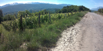 Wonderful view on the vineyards and the mountains from the gravel trail next to Col du Mont Cherel